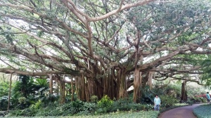 banyan-mom